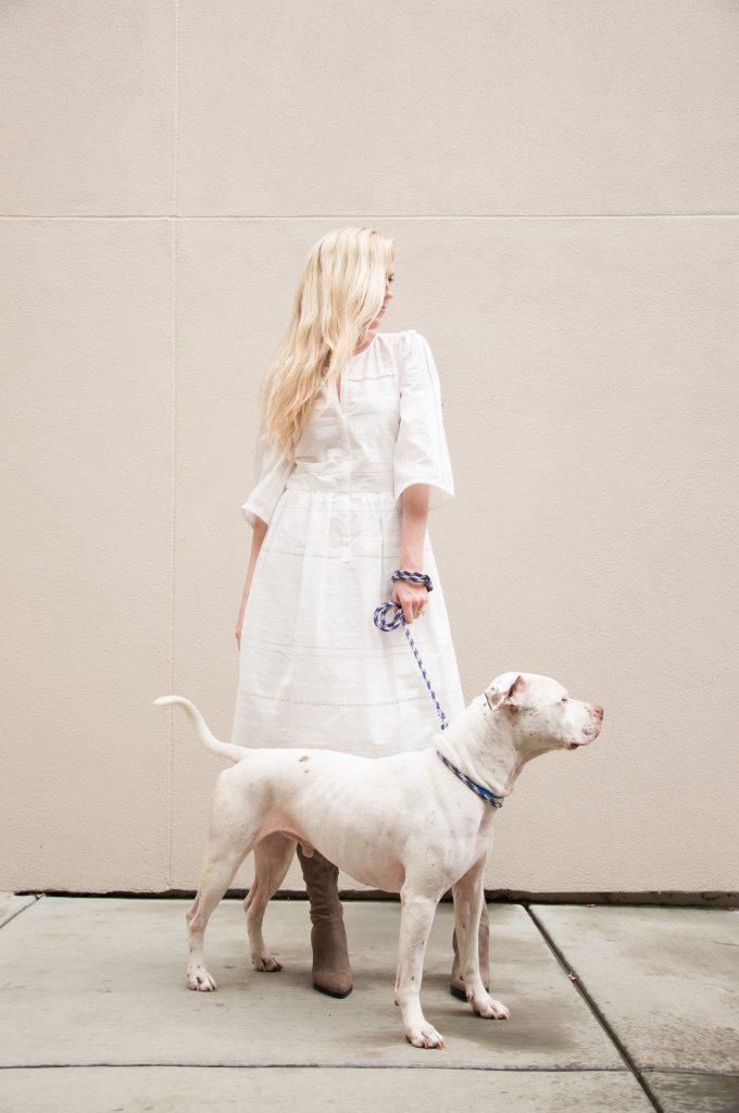 Rescue Dog Anti-Cruelty Pit Bull Mix