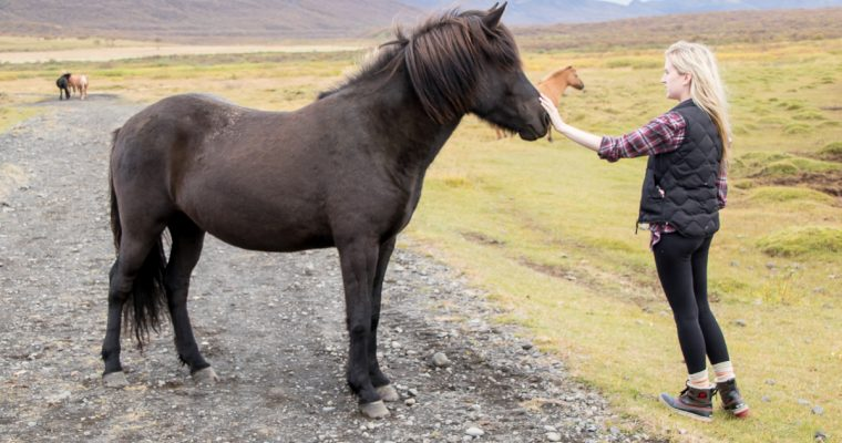 Iceland and its animals.