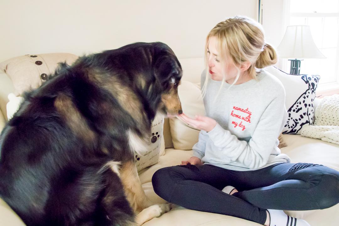 Homeward Bound Rescue Sick Dogs