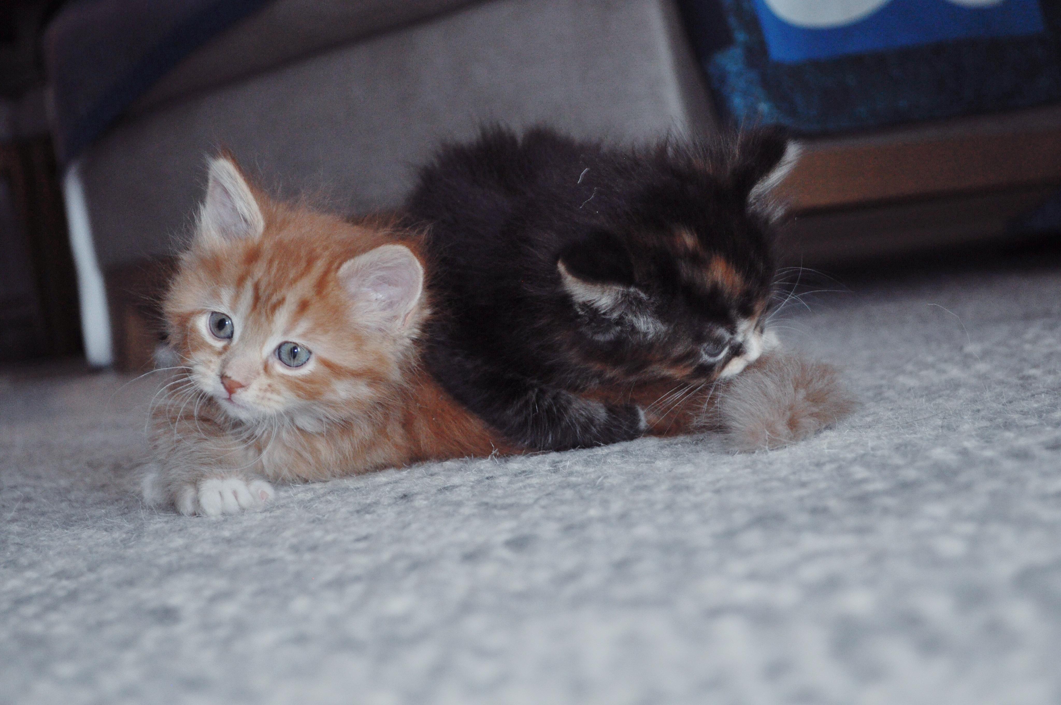 you've gotta be kitten me.