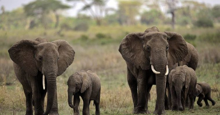 how to save our elephants.