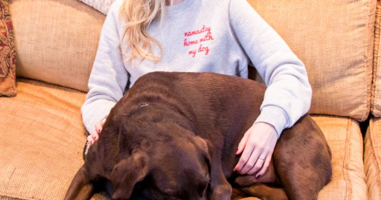 gift guide for dog lovers.