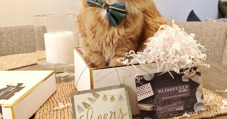 ultimate holiday gift guide for cat lovers.
