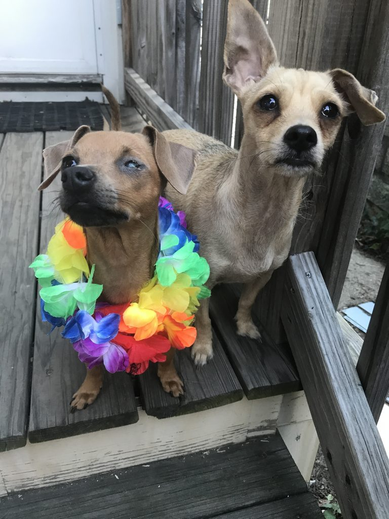 Peanut's friends Ginny and Walter - Rescue in Style