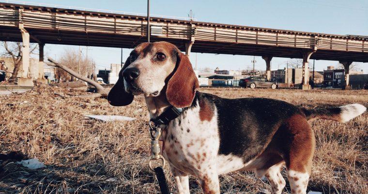 Rescue Confessions: Cooper Wonder