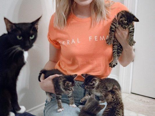 What kitten season actually means