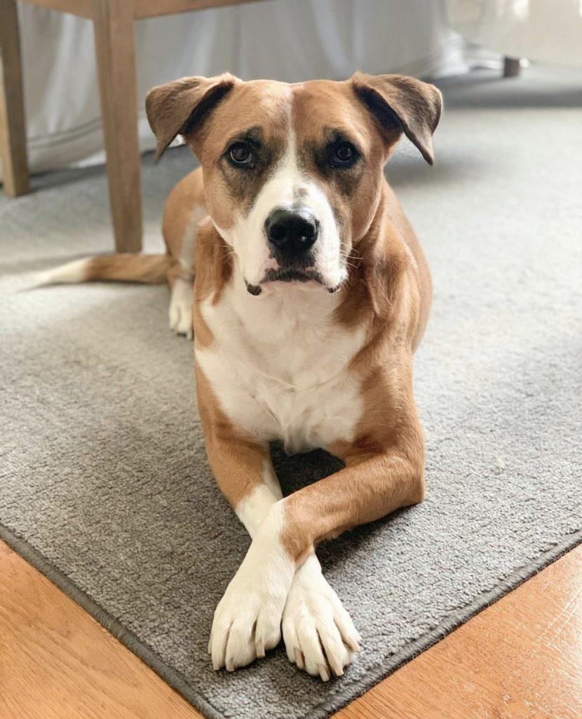 CACC Dog Rescue