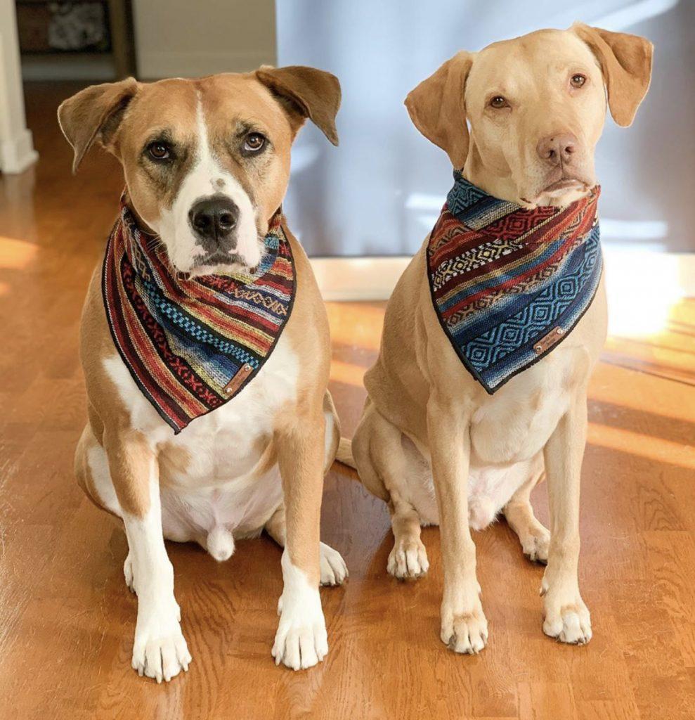 CACC Rescue dogs