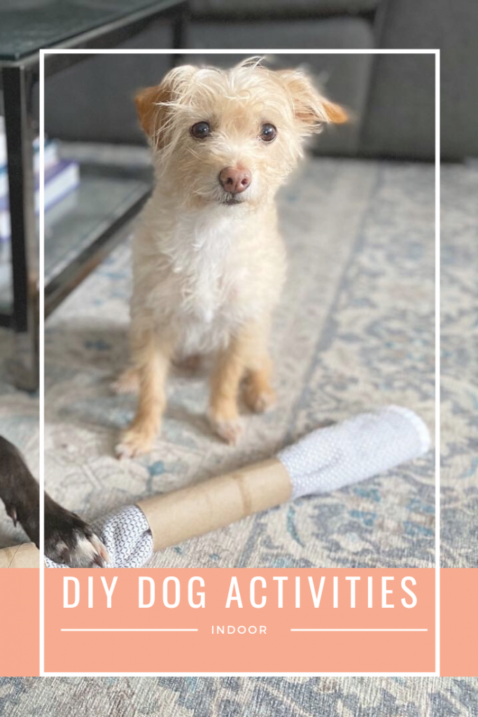 Whether it's a rainy day or you're just looking for stimulating enrichment for your pup, here are ideas to play with your dog. These activities are great for high energy dogs to help tire them out! Click through for a list of games to play with your dog.