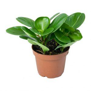 dog safe plant