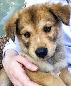 Junior foster puppy