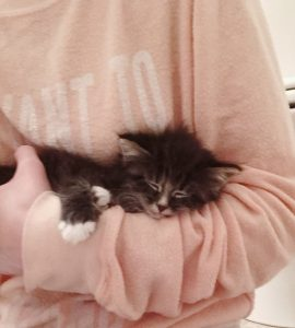 foster kitten mac